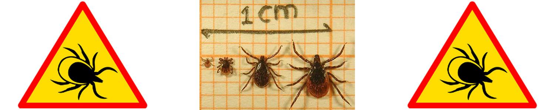 Insect werende kleding (tegen Teken en muggen)